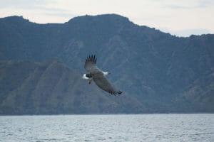 Adler-Komodo-Nationalpark