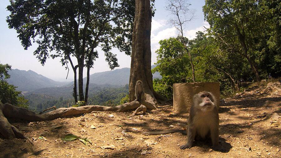Affenwald bei Sengiggi