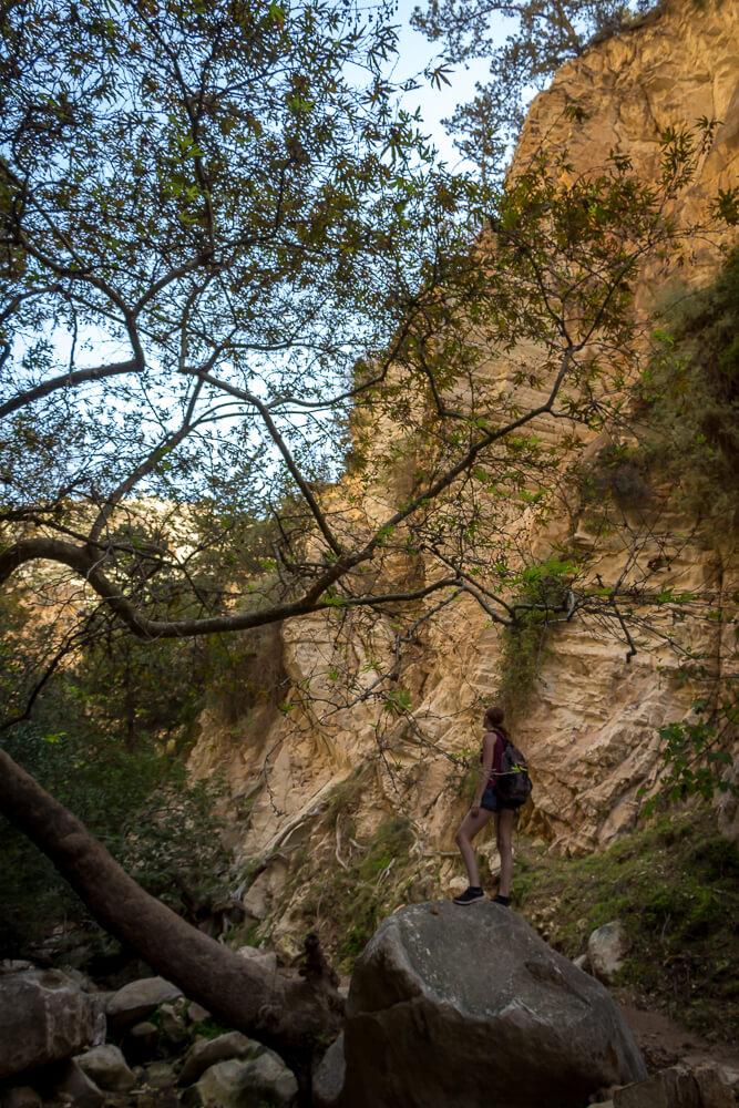 Ein Baum in der Avakas Gorge Schlucht