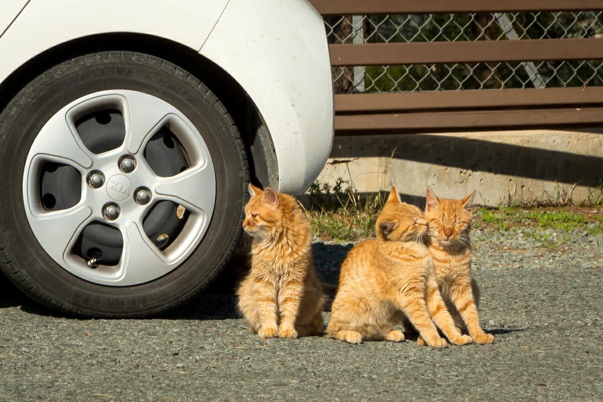 Katzen an unserem Mietwagen auf einem Parkplatz Zyperns