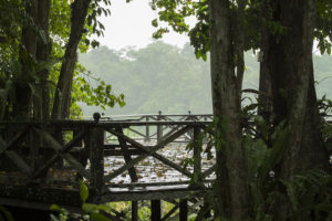 Kinabatangan-Nature-Lodge-Regen-Borneo