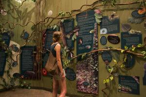 Mulu-Discovery-Center_Nationalpark_Borneo