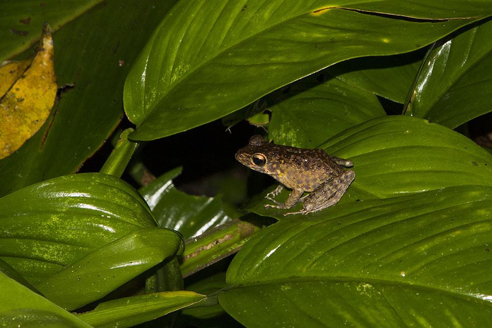 Ein kleiner Frosch während unserer Nachttour