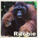 Orang-Utans-Semenggoh-Wildlife-Centre-Ritchie