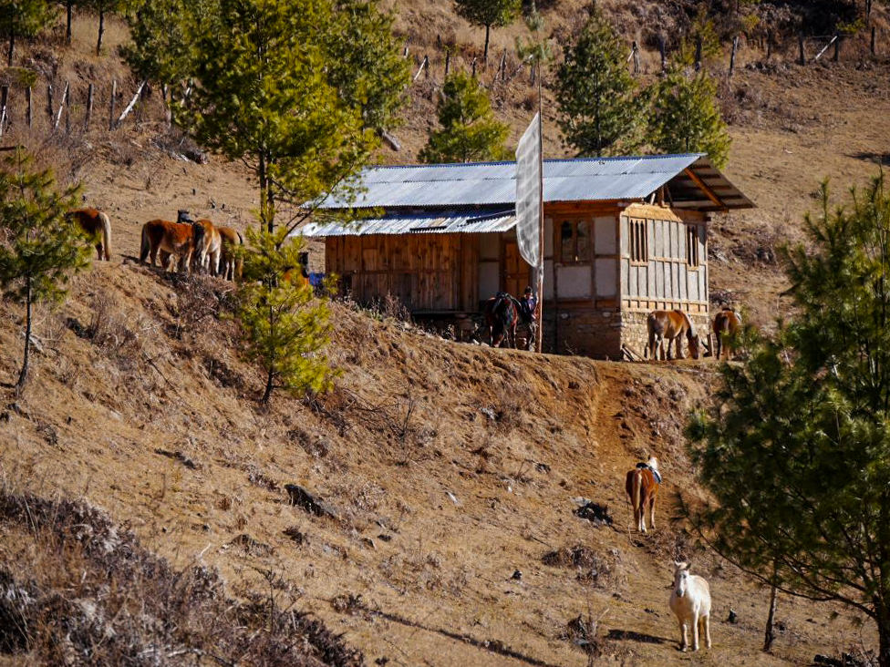 Pferde im Tang-Tal