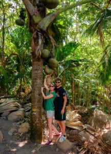 Bina und Francis unter einer weiblichen Coco de Mer-Palme