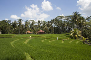 Wanderung-Indonesien-Bali-Ubud