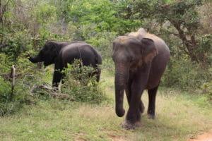 Elefanten sollte man nicht reiten