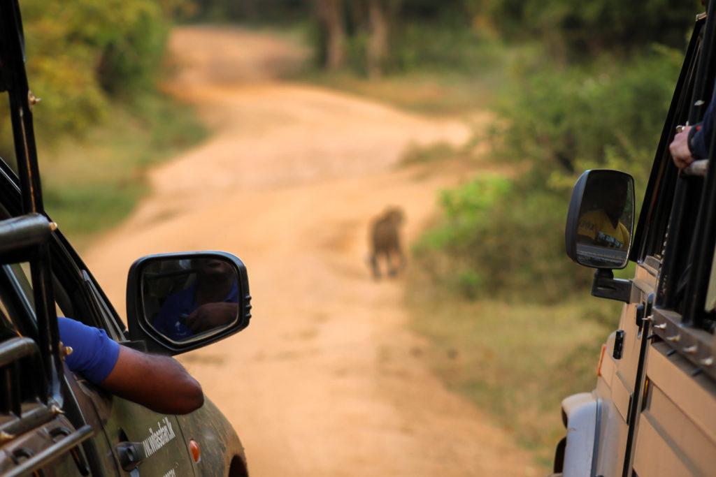 Safari-Jeeps beobachten einen Leoparden im Yala Nationalpark