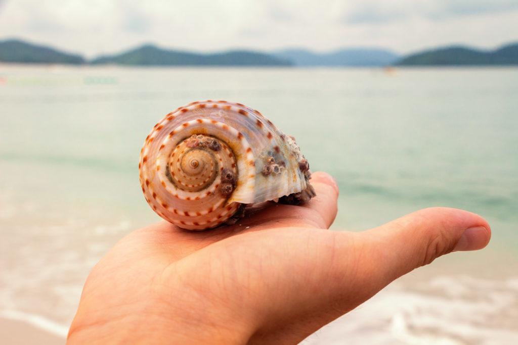 Muschel auf Hand am Cenang Beach auf Langkawi