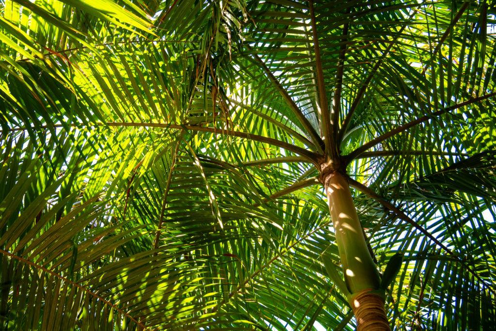 Ein Palmendach wie in einer Kathedrale