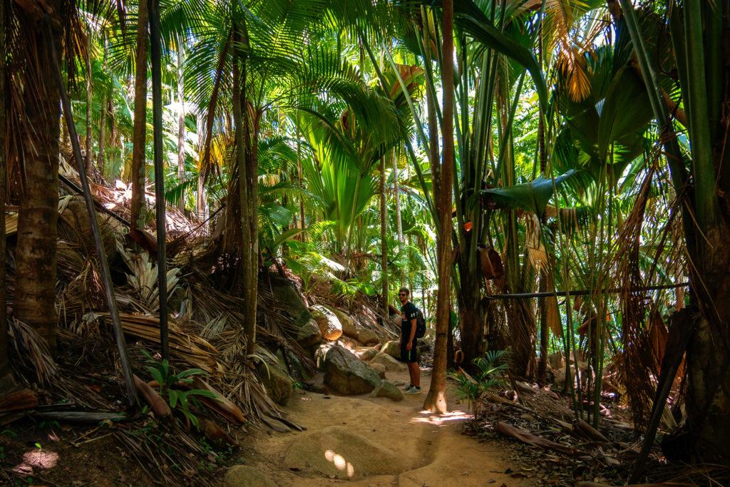 Palmen-Dschungel im Fond Ferdinand auf Praslin