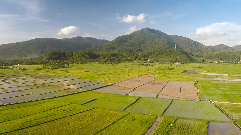 Die Reisfelder auf Langkawi von oben mit einer Drohne fotografiert
