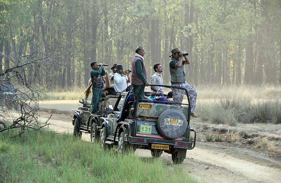 safari-kanha-nationalpark-fsoa