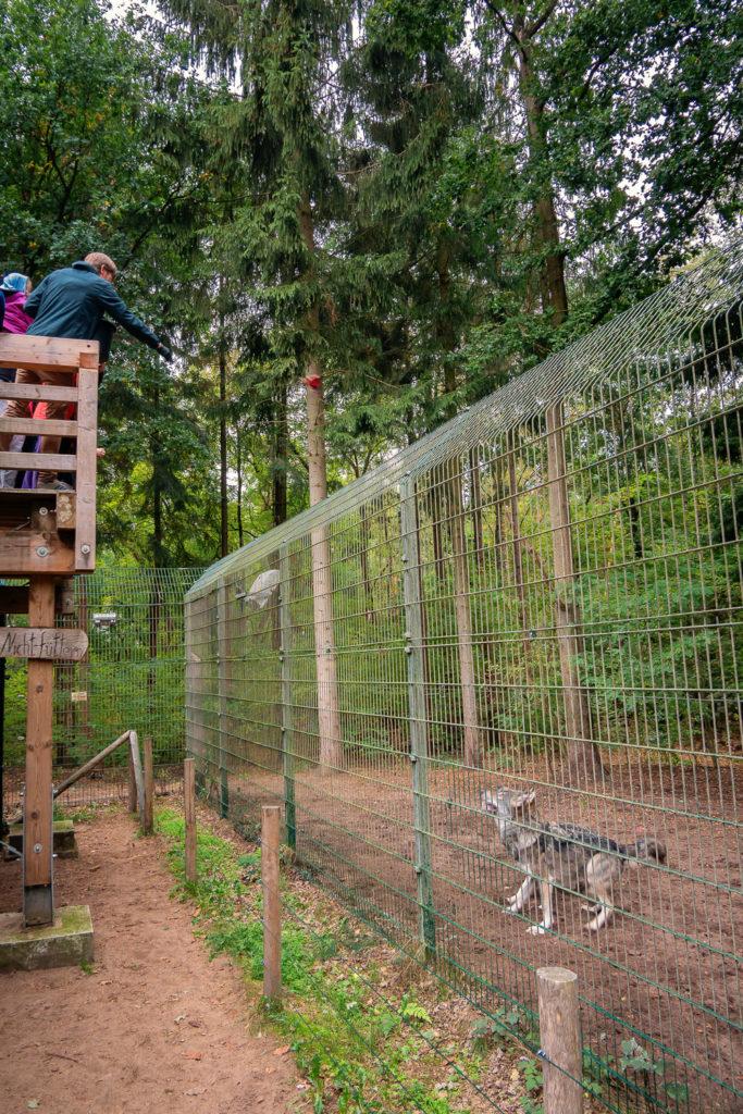 Fütterung der Wölfe im Wolfcenter Dörverden